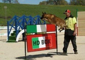 Van't Raveland – Fokkerij honden