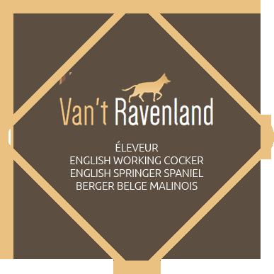 Van't Raveland – Eleveurs canins