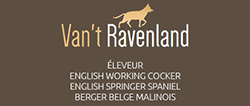 Ravenland - Eleveur canin
